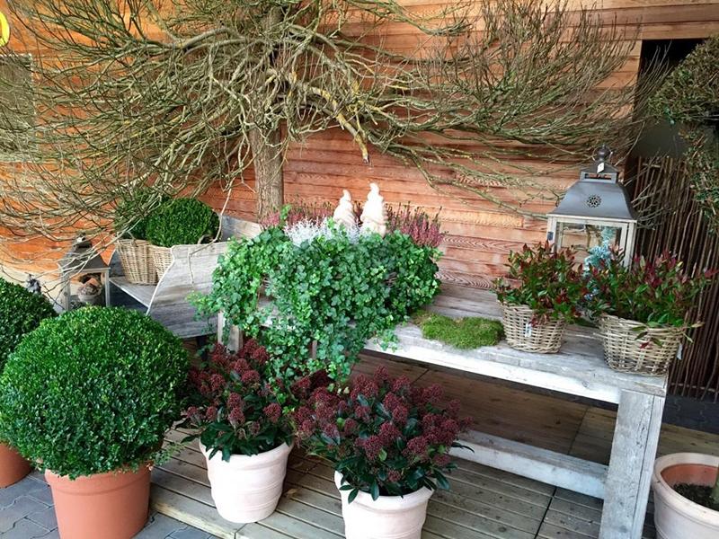 Древесные кадочные растения